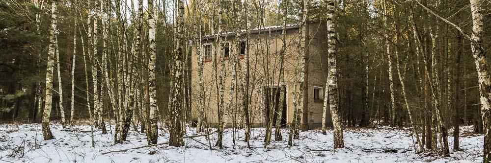 Verlassenes Haus im Birkenwald