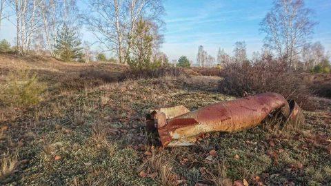 Wildnis auf einem ehemaligenTruppenübungsplatz in Brandenburg